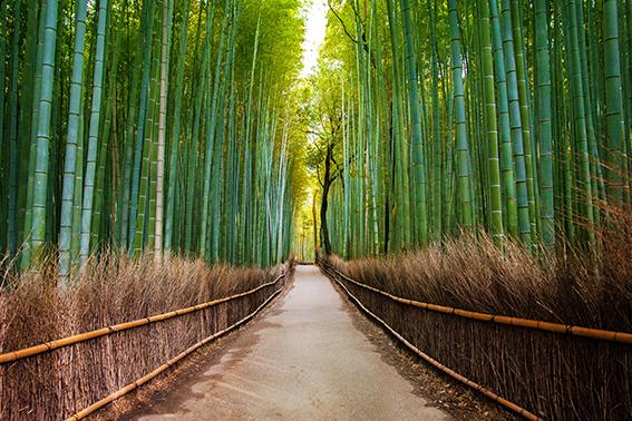 پوستر دیواری جنگل بامبو