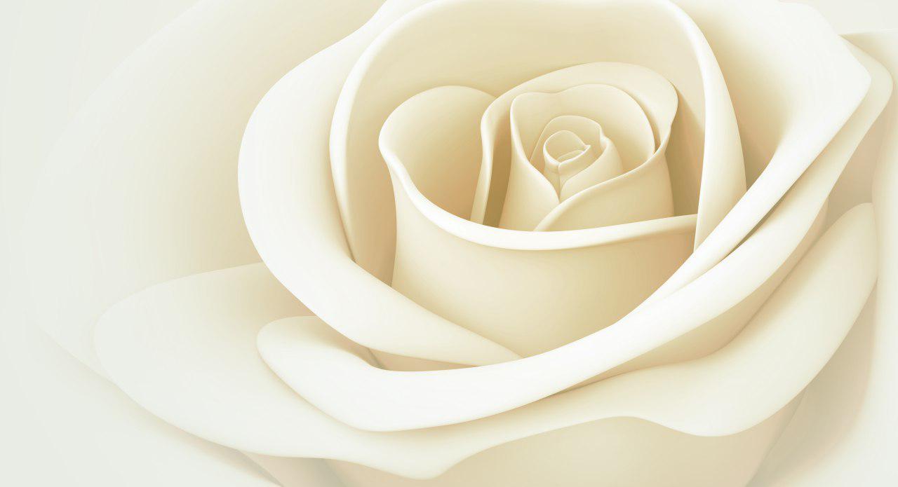 پوستر دیواری گل رز سفید طراحی شده