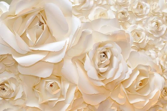 پوستر دیواری گل رز سفید